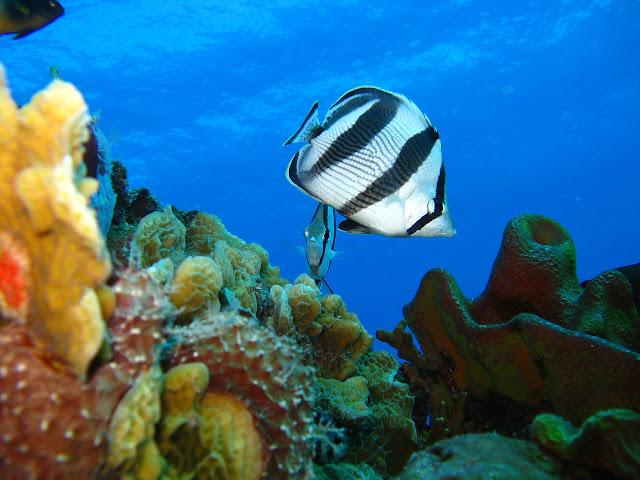Nature Reef Marine Coral Underwater Ocean Fish